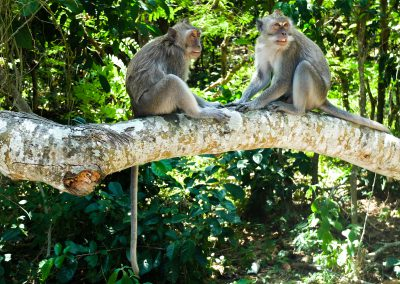 Monkeys in Uluwatu, Bali